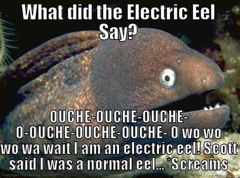 Eel Meme - bad joke eel memes quickmeme
