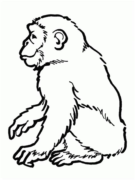 rainforest animals coloring pages coloring pages of rainforest animals coloring home
