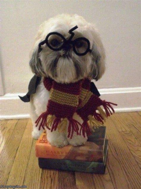 harry potter puppy harry potter funnydogsite