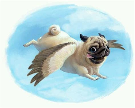 pugs sydney 253 best images about the pug on pug meme and pug