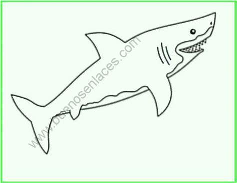 imagenes de animales carnivoros para colorear carnivoros dibujos imagui
