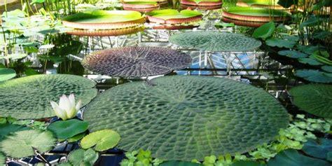 Tropical Zone Botanic Garden Of Bristol Glasshouses Botanic Garden Of Bristol