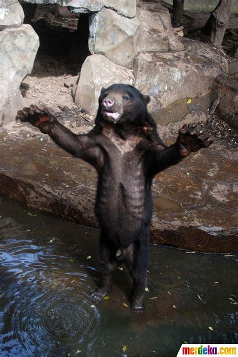 foto meratapi kondisi beruang kurus kelaparan  kebun