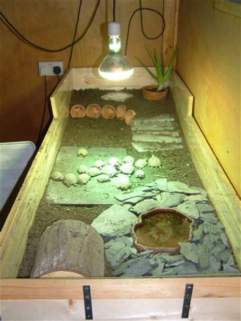 tpg photo gallery tortoise protection
