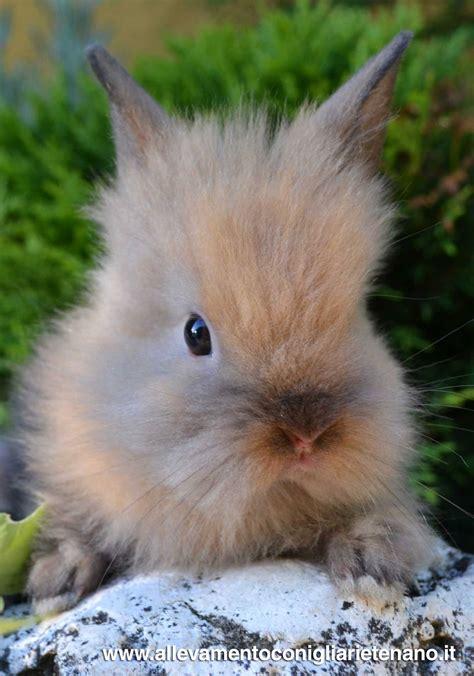 alimentazione coniglio testa di testa di coniglio la stalla dei conigli