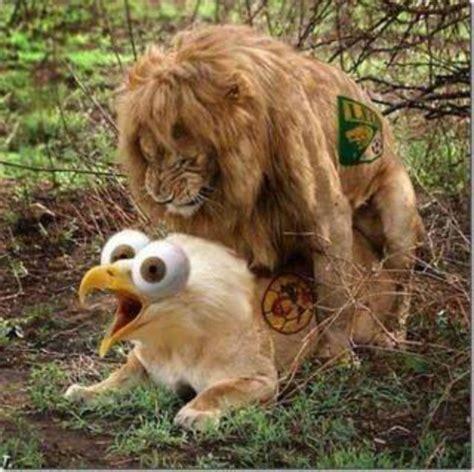 imagenes de leones y aguilas image gallery imagenes de leon america