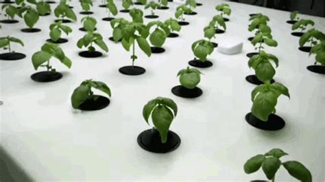 ikeas hydroponic system    grow vegetables
