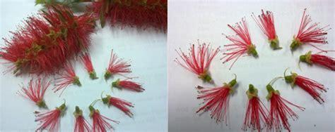 Minyak Kayu Putih Tea Tree tunas pohon di tangan bliblinews