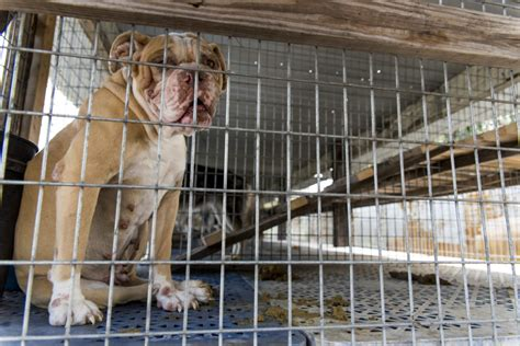 aspca puppy mills breaking news aspca assists in seizure of nearly 100 dogs from florida puppy mill
