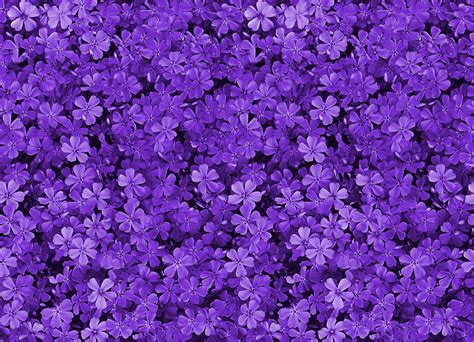 Purple Flowers Wallpaper Background Wallpapersafari Purple Flower Backgrounds Graphicpanic
