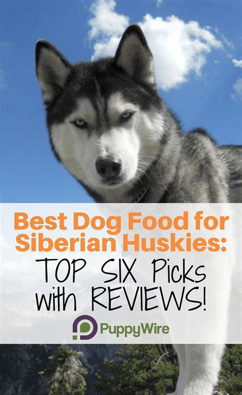 best food for yorkies with sensitive stomachs best food for huskies top 6 picks in 2018 with reviews