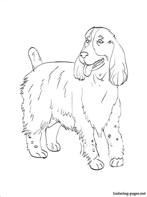 english cocker spaniel coloring pages coloring pages