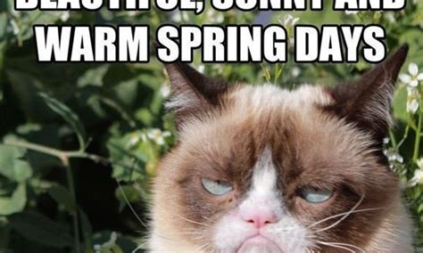 Funny Spring Memes - 15 funny spring memes to get you through these chilly