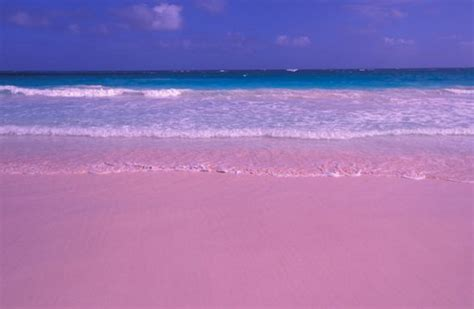 pink sand beach be a secret pink sands beach
