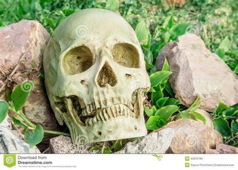 backyard skulls skull in the garden stock photo image 42816189
