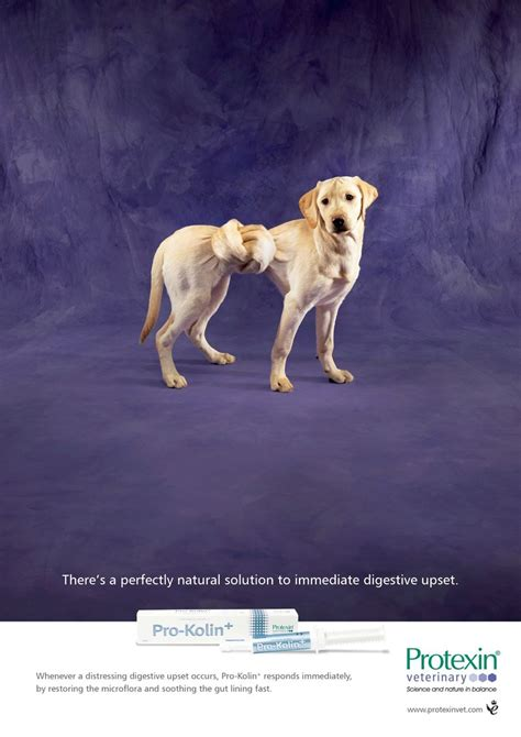 twisted stomach in dogs twisted stomach ads twisted stomach