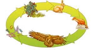 esempio di catena alimentare ecosistema tommaso