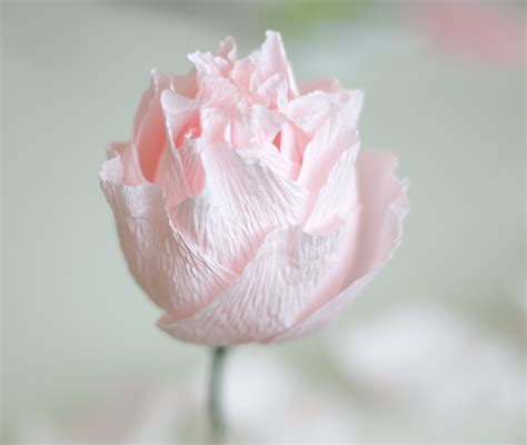 paper flower peony tutorial paper peony tutorial ash and crafts