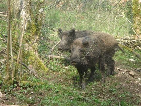 regarder vf la chasse à l ours r e g a r d e r 2019 film animaux de chasse