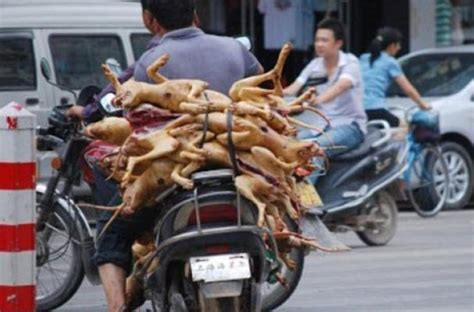 6 week puppy food foodista week food festival in china uses 15 000 canine carcasses