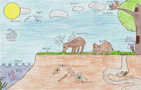 imagenes de ecosistemas faciles para dibujar todo sobre los ecosistemas dibujo de un escosistema