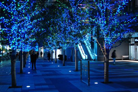 blue light shiny trees image 197891 on favim com