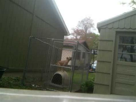 escapes from kennel houdini escapes kennel in 7 seconds funnydog tv