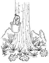 How To Make Maple Syrup Colouring Pages Page 3 sketch template