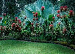 Tropical Flower Garden Hawaiian Tropical Gardens Noel Morata Photography