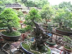 Pupuk Untuk Bunga Bonsai tanaman bonsai tanaman bunga hias