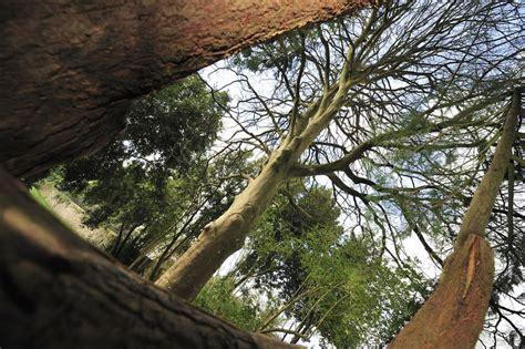 l arbre dans la ville ville de quimper