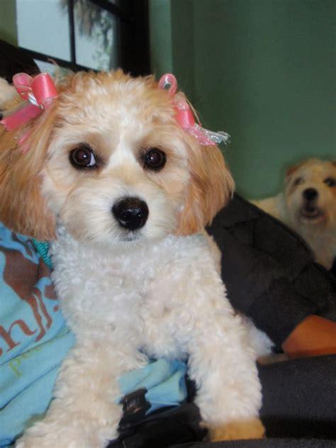 lush puppy lush puppy pet resort pet boarding pet sitting jupiter fl yelp