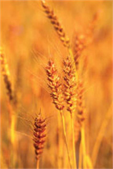 3 facts about whole grains nutrition facts whole grains