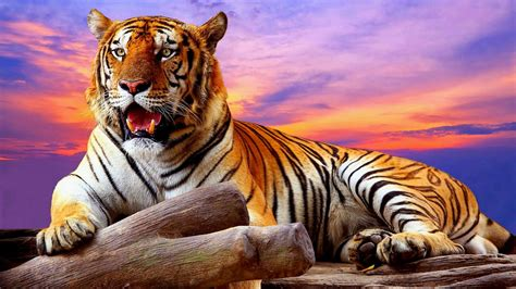 Hd Wallpaper For Android Tiger | tiger portrait wallpaper wallpaper studio 10 tens of