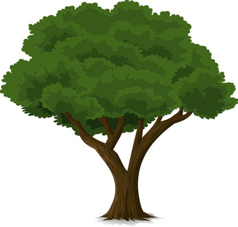 images tree free vector graphic tree forest trunk nature leaves