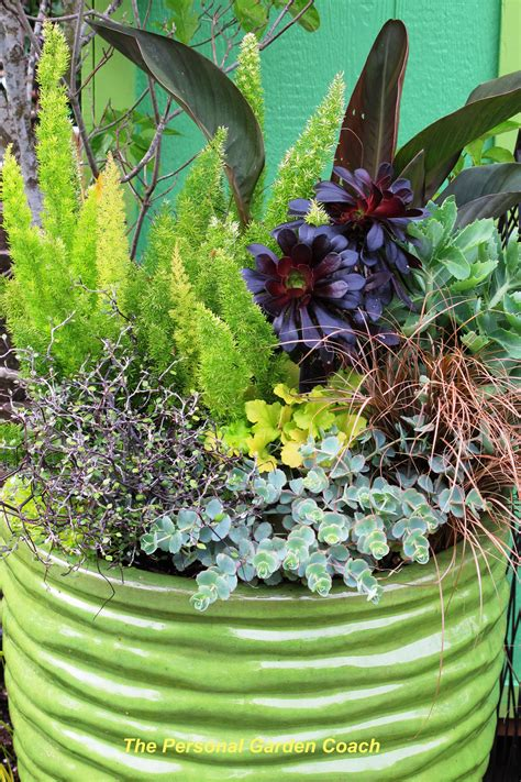Design For Potted Plants For Shade Ideas Wordless Wednesday Container Garden Season Is Open The Personal Garden Coach