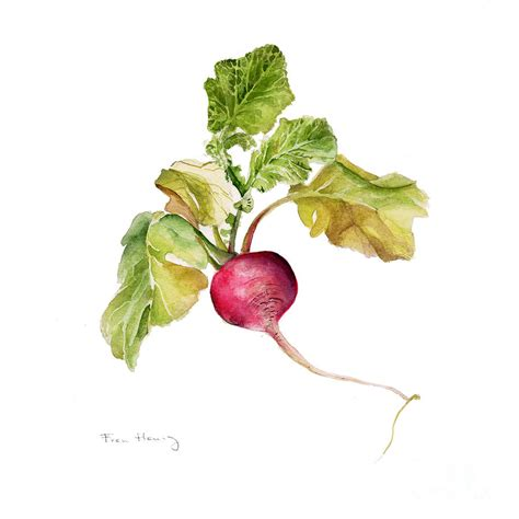 Radish Serie radish painting by fran henig