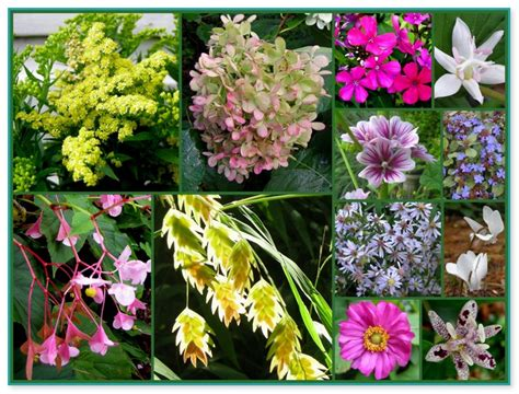 flowers for shady gardens flower garden borders pictures