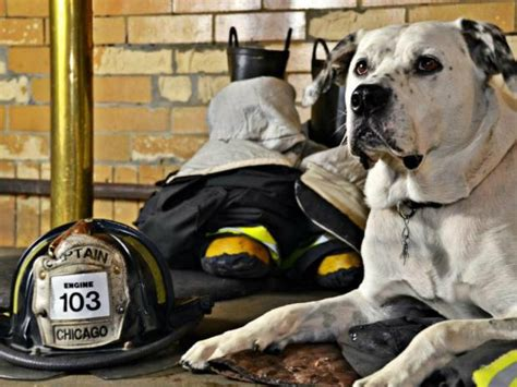 fire house dog cast freckles the firehouse dog is a local celebrity and a neighborhood fixture near west