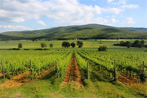 chianti monteriggioni vino chianti dell agriturismo chianti siena monteriggioni