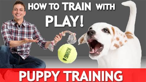 how to discipline puppy how to with play with your new puppy how to