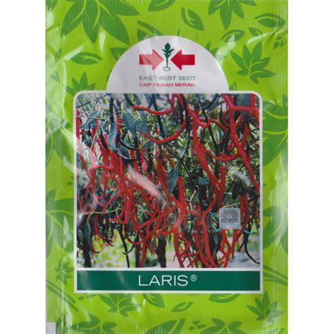 Benih Paprika Panah Merah jual benih cabe keriting laris 10 gram murah bibitbunga