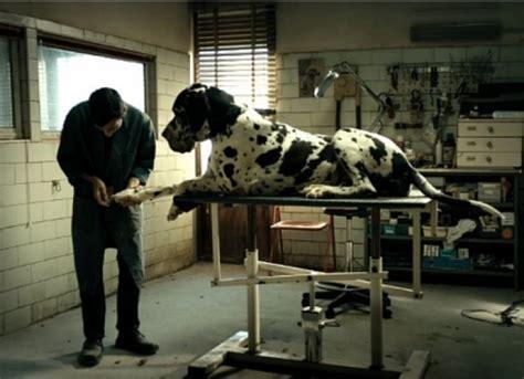 se filmer dogman trailer primer avance de dogman el nuevo thriller