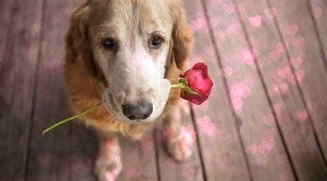 dogs with flowers does my me learn to spot the signs rover