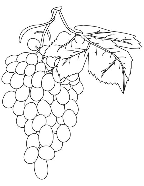 purple grapes coloring page red grapes coloring pages download free red grapes