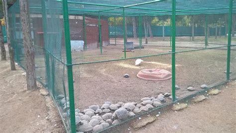 gabbie per tartarughe di terra il caso tartarughe d acqua chiuse in un recinto senza