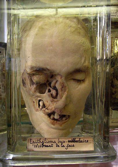 ideen wandgestaltung wohnzimmer 4948 specimen display oddities totenkopf