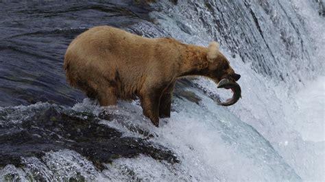 best wildlife photography best wildlife photography lenses 2 500 a listly list