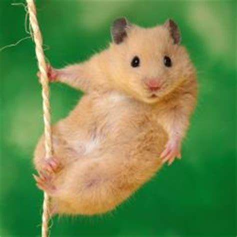imagenes en movimiento de ratones 191 qu 233 comen los ratones descubre c 243 mo y de qu 233 se alimentan