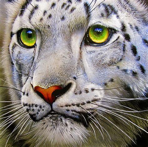 imagenes animales asombrosos im 225 genes arte pinturas animales y flores asombrosa